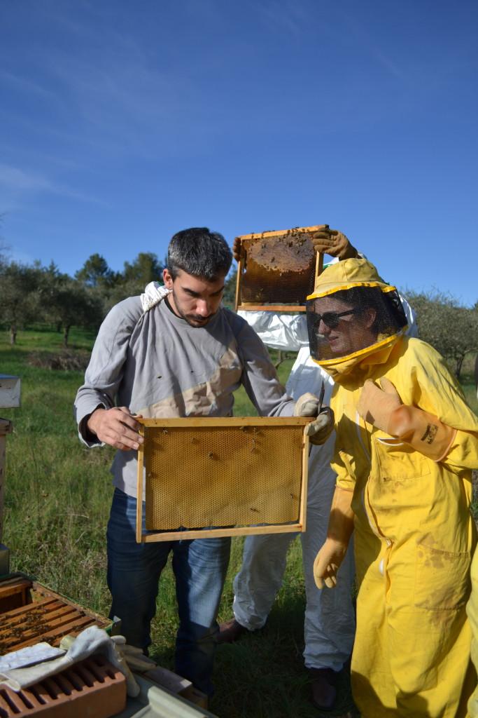 Visita didattica in apiario
